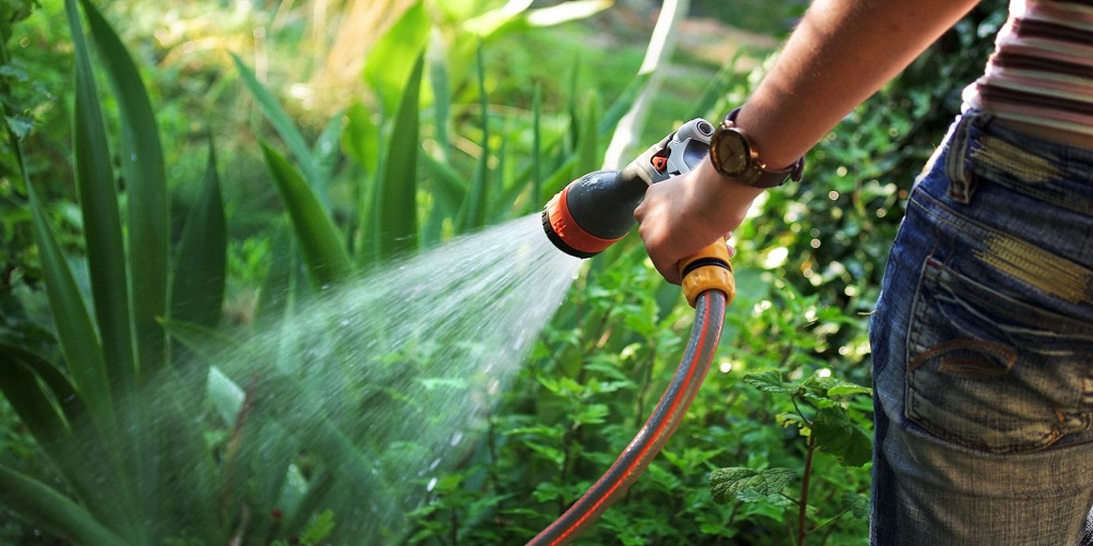 How Can You Save Water in Your Garden?